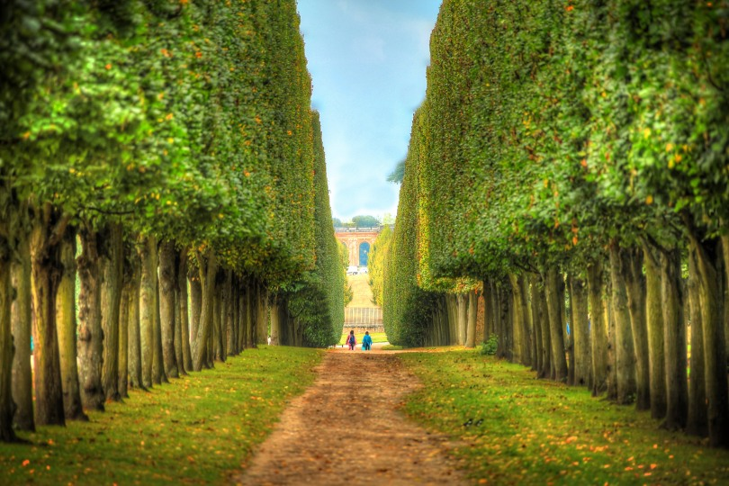 The symmetry of well groomed trees on the grounds of Versailles.