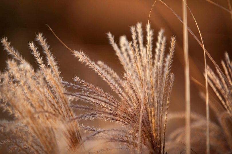 Meadow Grass Patterns