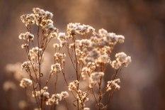 Meadow Weeds