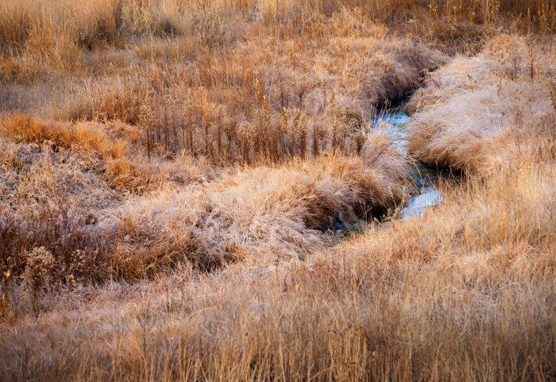 Mountain Meadow Stream