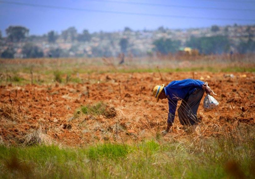 Soweto Farmer