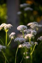 _MGL6472_Wildflowers