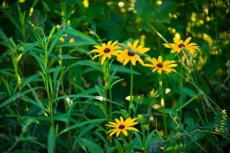 _MGL6473_Wildflowers