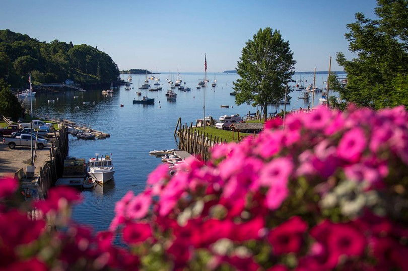 Rockport Harbor flowers