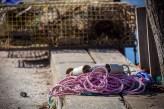Lobster Rope
