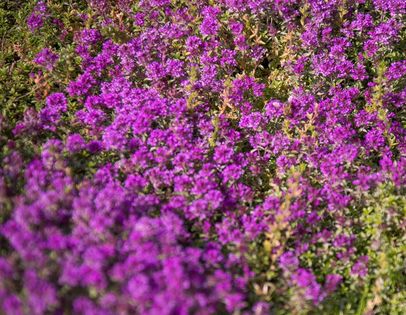 UW flowers