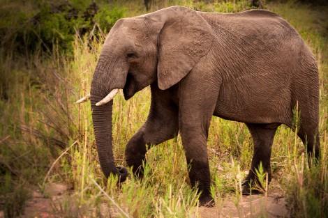 IMG_0402_Dancing Elephant_web