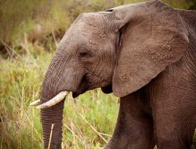 IMG_0403_Elephant_web