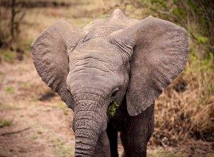 IMG_0411_Elephant Ears_web