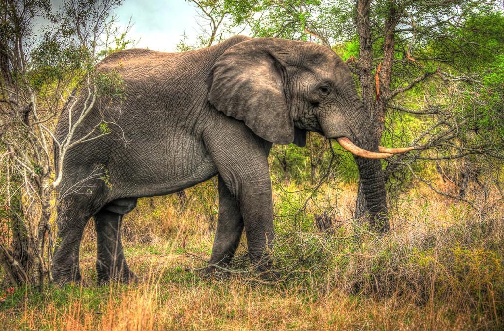IMG_0666_7_8_Bull Elephant_web