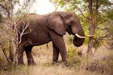 IMG_0670_Elephant_web