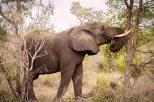 IMG_0678_Elephant_web