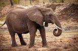 IMG_0708_Elephant_web