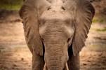 IMG_0731_Elephant_web