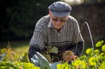 A Master Gardener harvests fresh vegetables for our bed and breakfast.