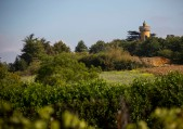 Overlooking the vineyard, an ancient watchtower still stands guard.