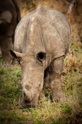 IMG_0354_Rhino_web