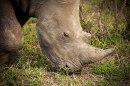 IMG_0369_Rhino_web
