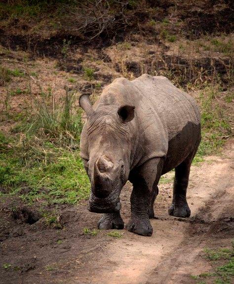 IMG_0454_Rhino Pass_web