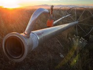 Abandoned irrigation equipment marks the end of harvest season.