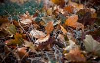 IMGL2204_leaves