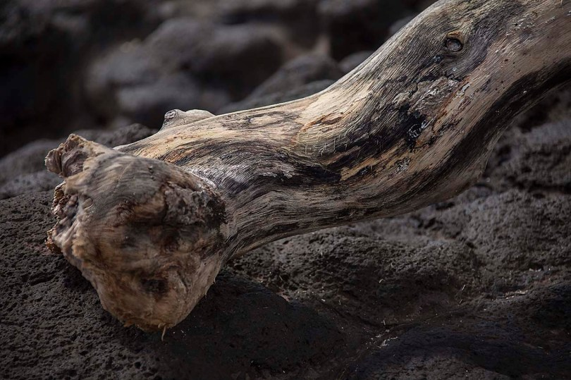 Drift wood and lava, Samoa.