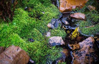 Rich Green Moss.