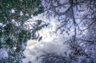 DSC05247_8_9_Trees_Sky