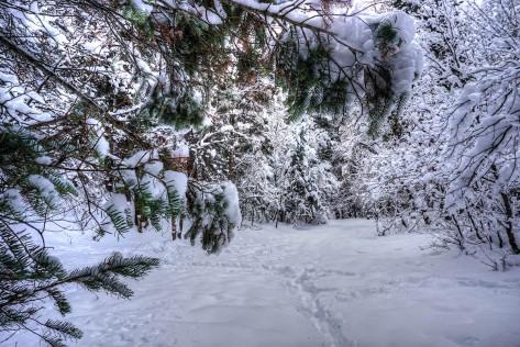 DSC05253_4_5_Snowy Woods