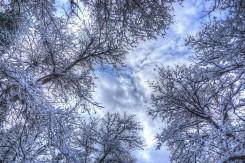DSC05271_2_3_Trees_Sky