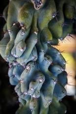 Close up cactus.