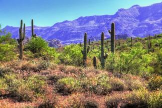 Cactus desert.