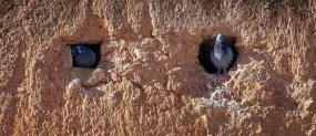 Bird house of Hassan Tower.