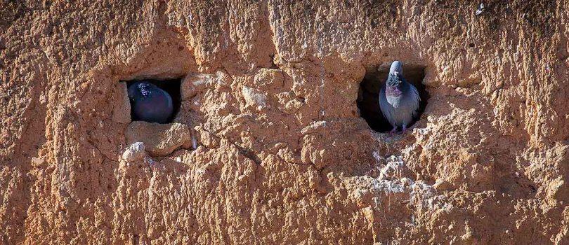 Bird house of Hassan Tower.