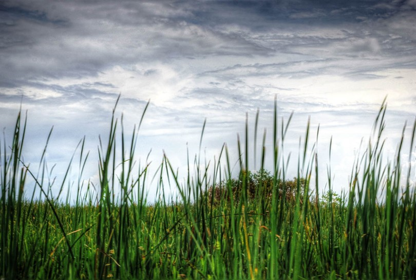 Reeds and Marsh.