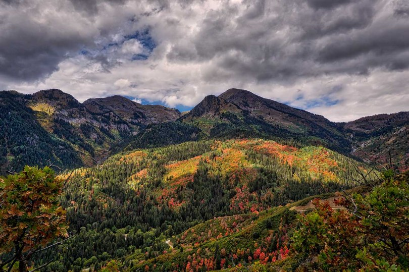 Wasatch fall colors.