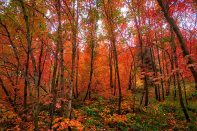 Fall leaves color the forest.