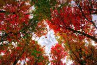 Fall Canopy.