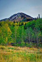 Aspen fall colors.