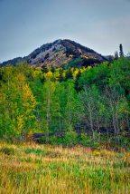 Aspen fall colors.