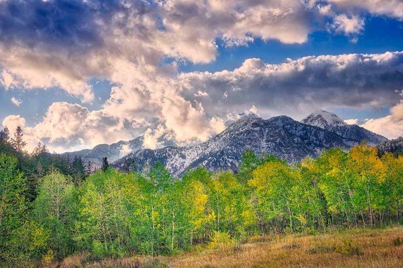 High Mountain Meadow.
