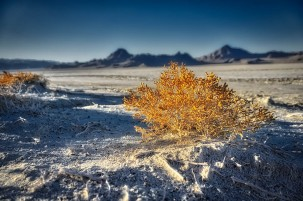 Plants grow in the Bonneville Salt Flats.