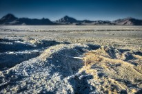 Lifeless vegetation of the Bonneville Salt Flats.